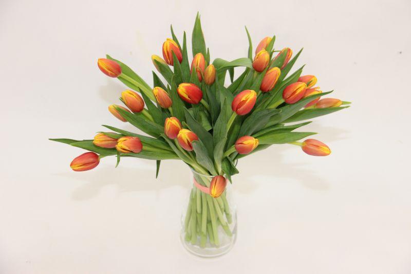 tulipany teresy