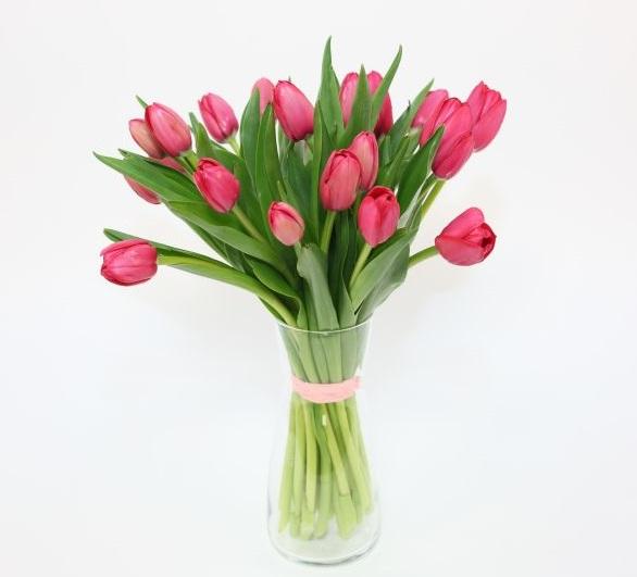 tulipany klary