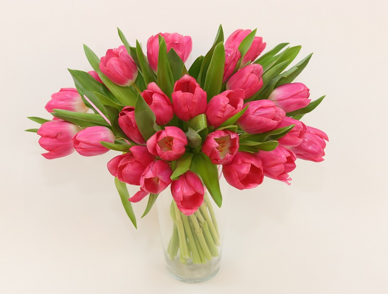 tulipany marii