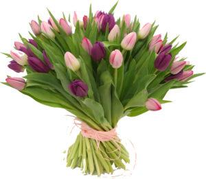 kwiatki na przeprosiny